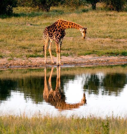 andBeyond Ngala Safari Lodge照片