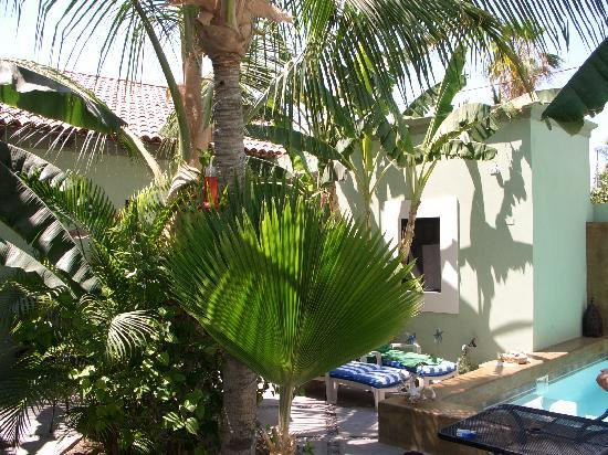Casa Verde Inn: il giardino