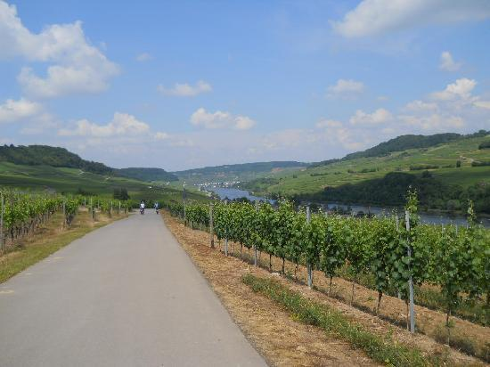 FEEL! Bike Tours : through the vineyards