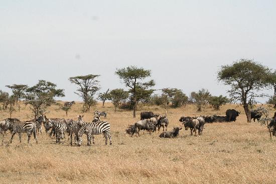 Porini Mara Camp: In the conservancy