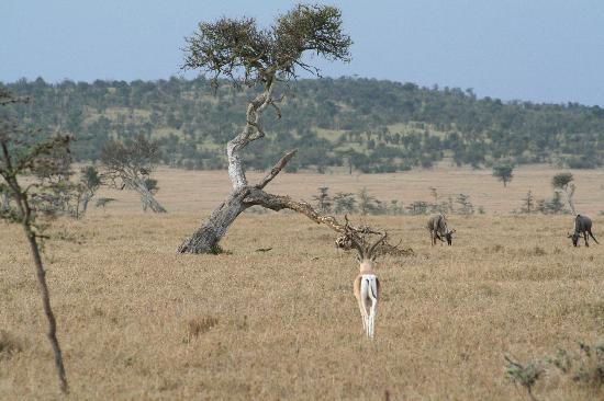 Porini Mara Camp: Scenery
