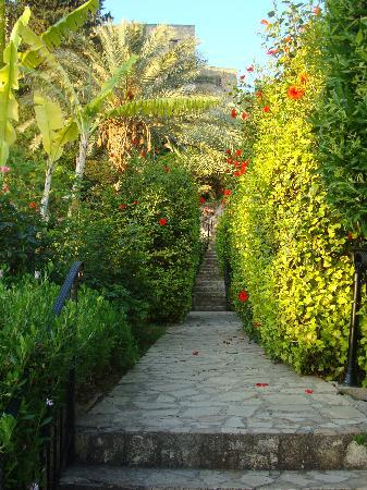 Bellapais, Cyprus: Arbor