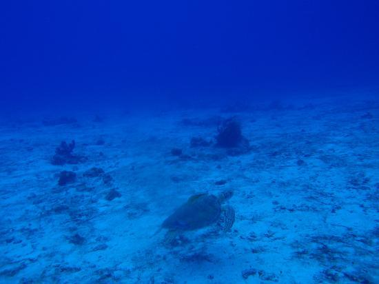Cozumel Palace: Followed a sea turtle along the reef!