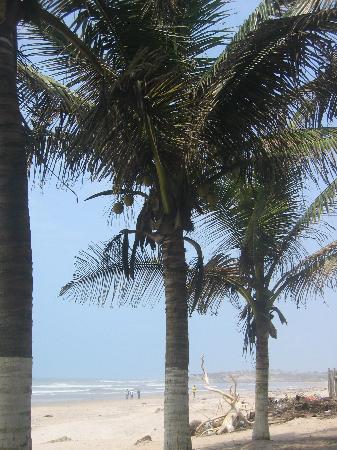Coco Beach: palm