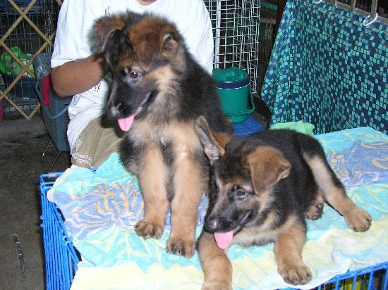 Chatuchak Weekend Market: Cute puppies!