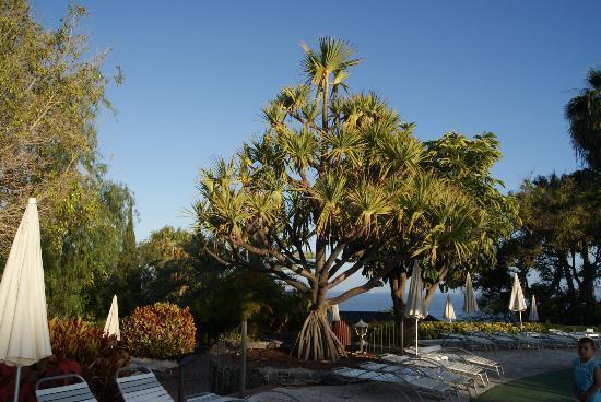 Hotel Jardin Tecina: impresionante