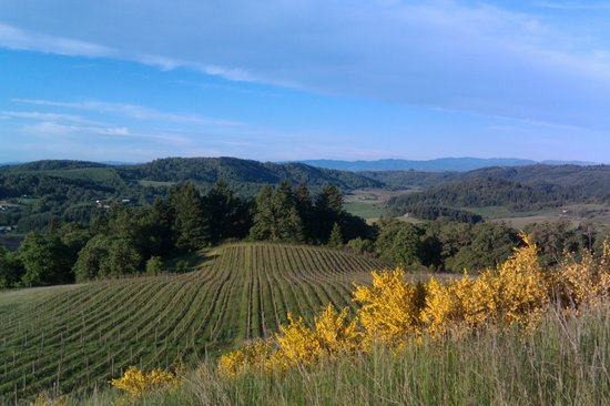 Youngberg Hill Vineyards & Inn: Early morning vineyard view