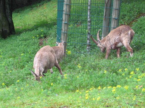 Rosegg, Αυστρία: in cerca di cibo