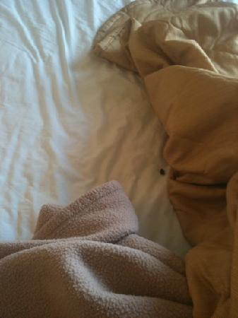 Quality Inn & Suites: bugs in bed