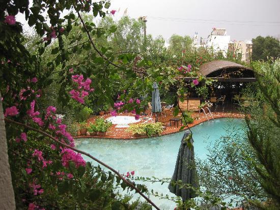 El Vino Hotel & Suites: View of the pretty pool