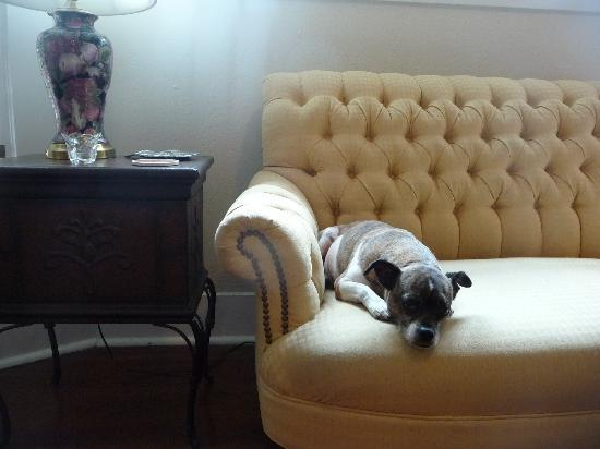 Granbury Gardens Bed And Breakfast: B&B's cuteydog