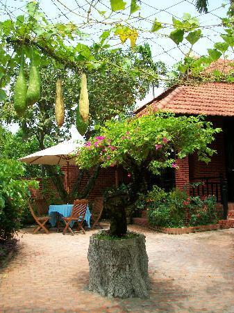 Betel Garden Villas: A 'bonsai' bouganvillea