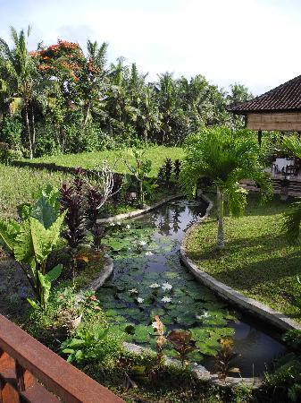 Sugars Villas: View overlooking fish pond with lotus flowers