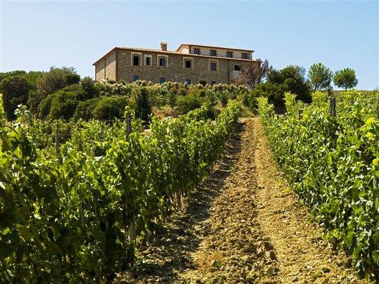 Arcidosso, إيطاليا: veduta esterno dalla vigna