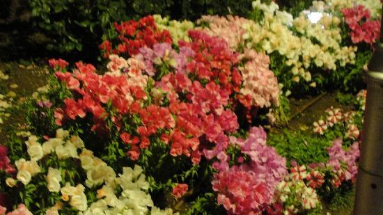 Gardenia Nazareth Hotel: beautiful flowers