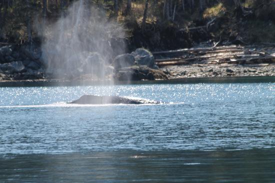 Seward, Alaska: whale