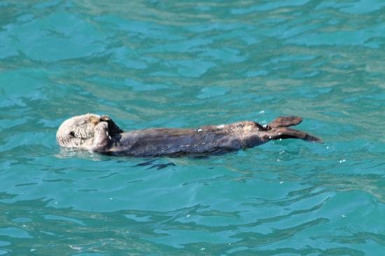 Seward, Alaska: sea snotster
