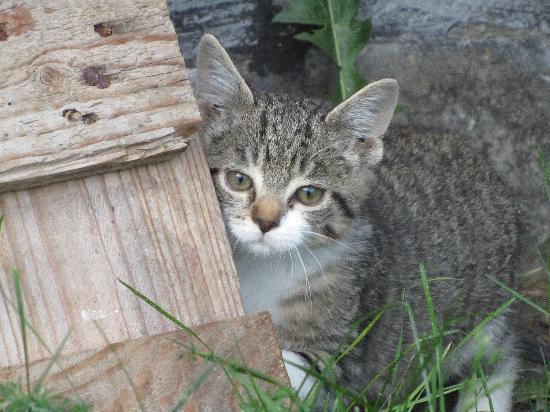 Komfortbauernhof Zittrauerhof: Katze