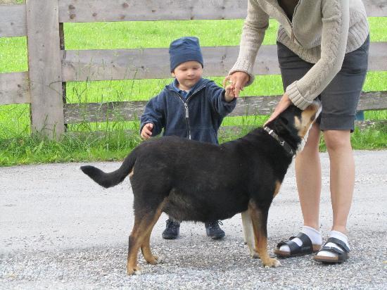 """Komfortbauernhof Zittrauerhof: """"Wachhund"""" Asta"""