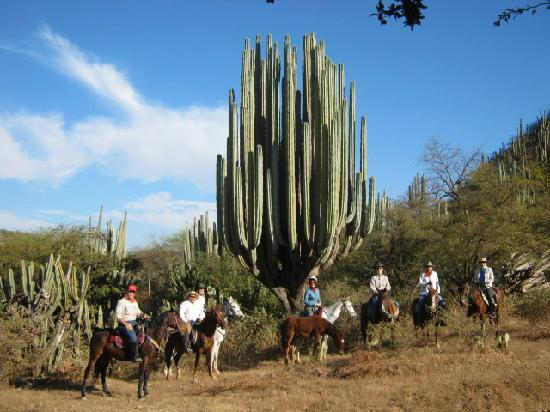 mexico united states map html with Locationphotodirectlink G150801 D1868539 I31838856 Horseback Mexico Oaxaca Southern Mexico on Kusadasi Tourist Map besides 14761 Coast To Coast Map V 16 further State prevention also Argentina los glaciares national park moreover 1912.