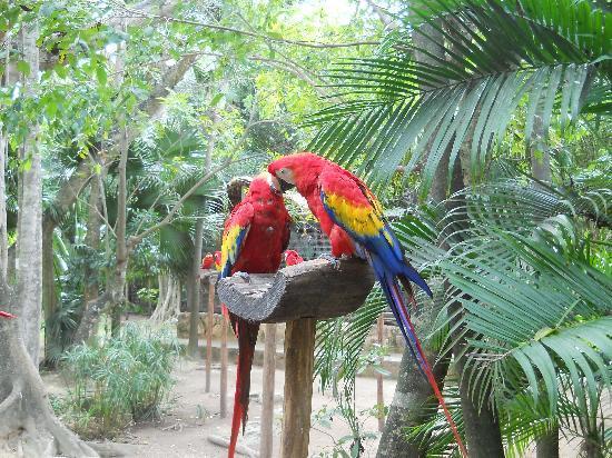 Parque Cenote Las Mojarras: no tengo fotos del cenote de ese dia....