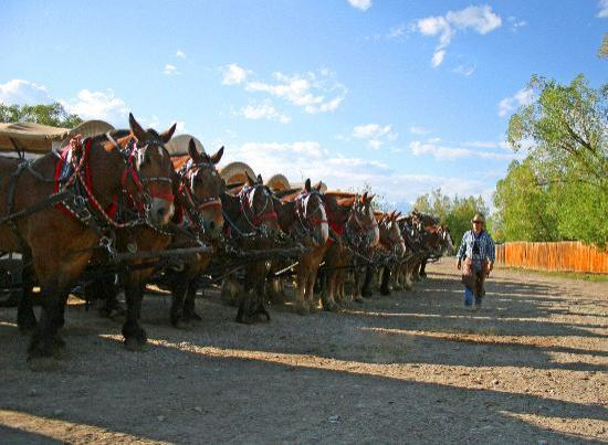 Bar-T-5 Cookout : Wagons lined up, ready to go!