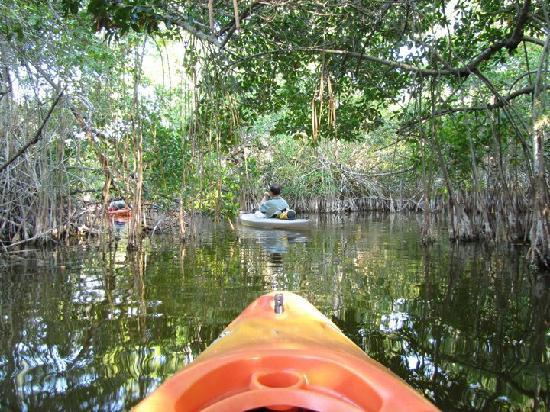 Tour The Glades - Private Wildlife Tours: Into The Mangroves