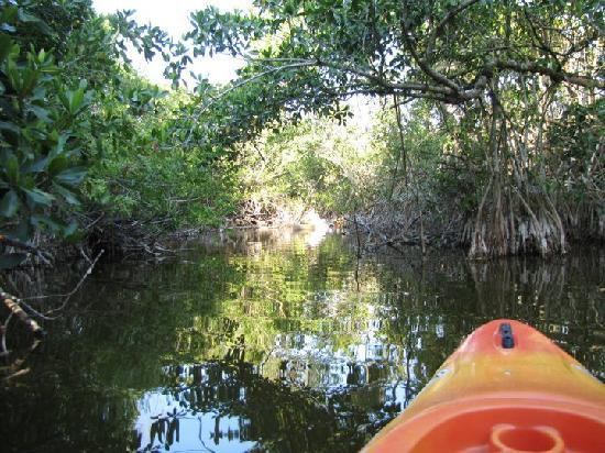 Tour The Glades - Private Wildlife Tours: Calm Waters