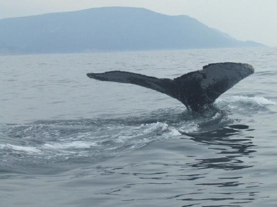 The Mountain View Motel & Cottages: Local Whale Watching