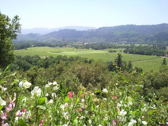 Rombauer Vineyards: view from the garden