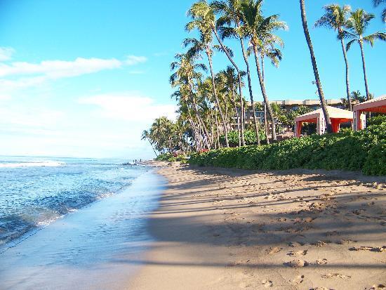 Hyatt Regency Maui Resort And Spa Beach In Front Of Grounds