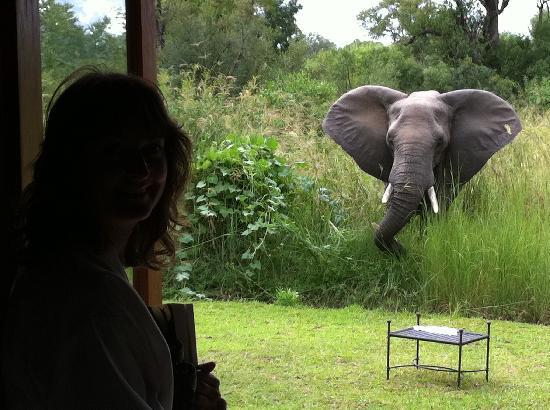Sabi Sabi Selati Camp: Elephant outside our suite