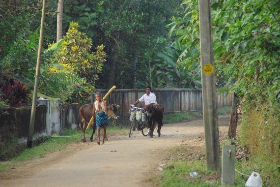 Thani Illam: The street outside the homestay