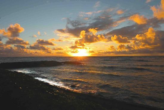 كايل موكيهانا: Mokihana sunrise
