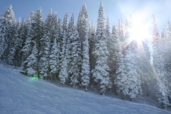 Steamboat Springs, CO: Trees alongside the Storm Peak Lift on a Sunny Day mid-December