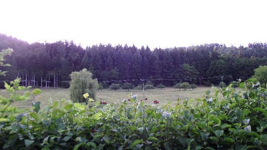 Landgasthof Hirsch: View