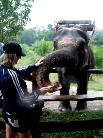 Khao Lak Land Discovery - Day Tours: Feeding Time