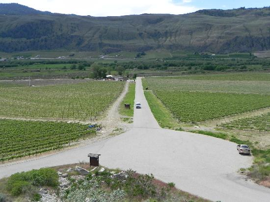 Burrowing Owl Estate Winery Guest House: access road