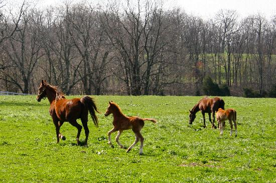 Shelbyville Ky Horse Farm Tours
