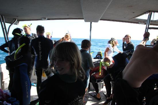 Dolphin Seafaris: bereit machen fürs Schnorcheln mit den Delfinen