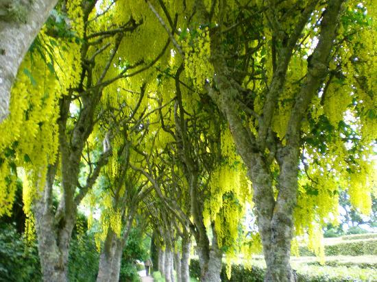 Nairn, UK: gardens