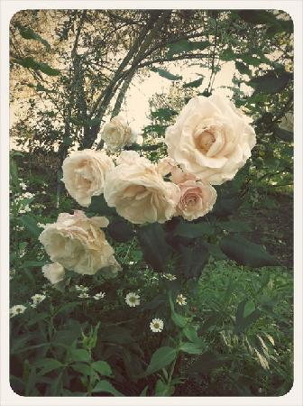 Belle de Jour Inn: Roses as far as the eye can see