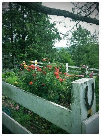 Belle de Jour Inn: Rose garden