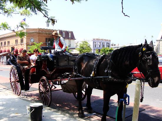 Cape May Carriage Company: a beautiful horse and carriage