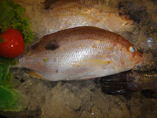 The Orchid : Yellow snapper