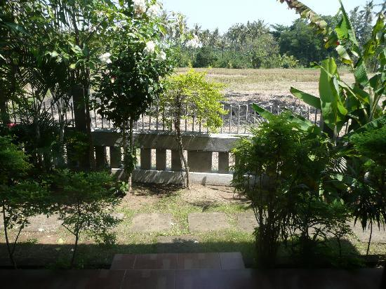 Mumbul Guesthouse : les champs face aux chambres