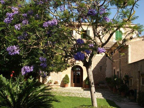 Sa Torre de Santa Eugenia: Coutyard & Jacaranda