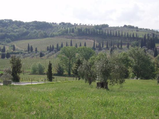 In Toscana - Day Tours: オルチャ渓谷