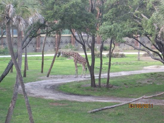 Disney's Animal Kingdom Villas - Kidani Village: Vista desde el balcon de la habitacion