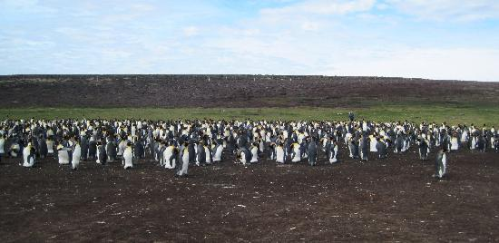 Volunteer Point: penguin tour